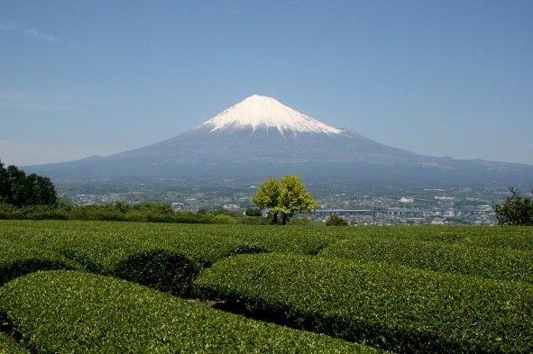 富士市の茶畑から望む富士山