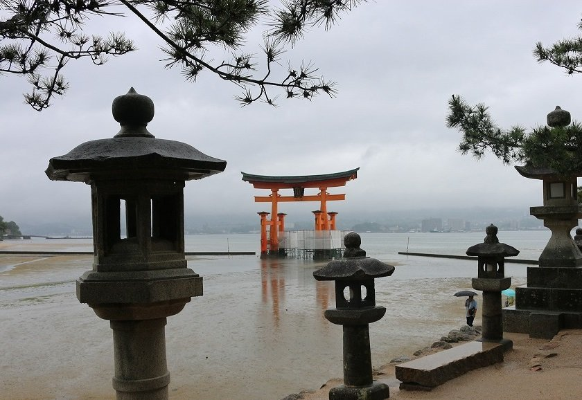 厳島神社の大鳥居。改修工事のため、一部が覆われている
