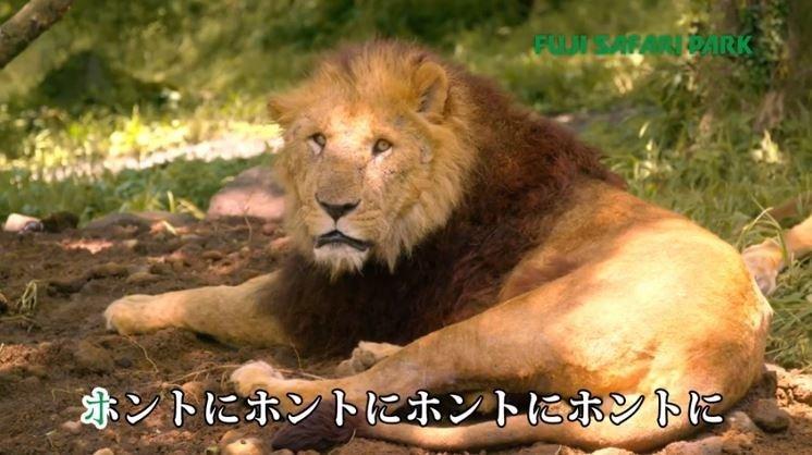 富士サファリパークのCM(画像は富士サファリパーク公式チャンネルより)