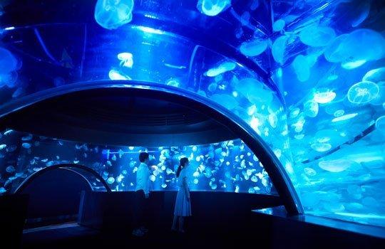 クラゲのトンネルのような水槽も(画像は京都水族館公式サイトより)