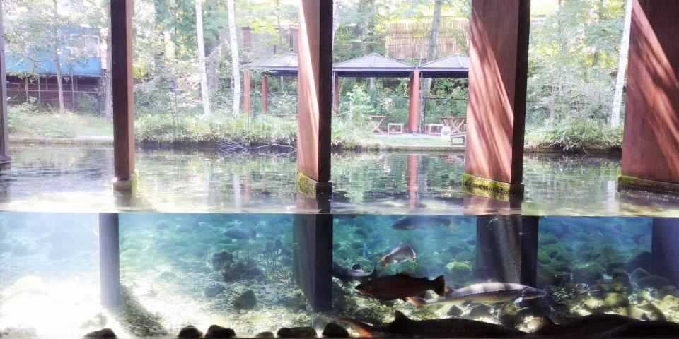 富士湧水の里水族館・横見水槽(画像提供・桔梗屋)