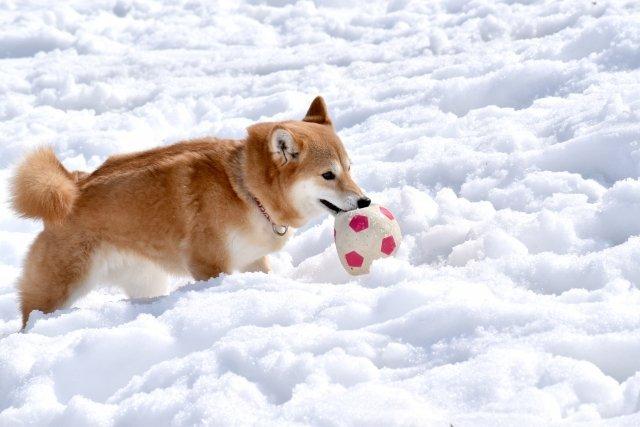 雪が降ると嬉しい?(画像はイメージ)