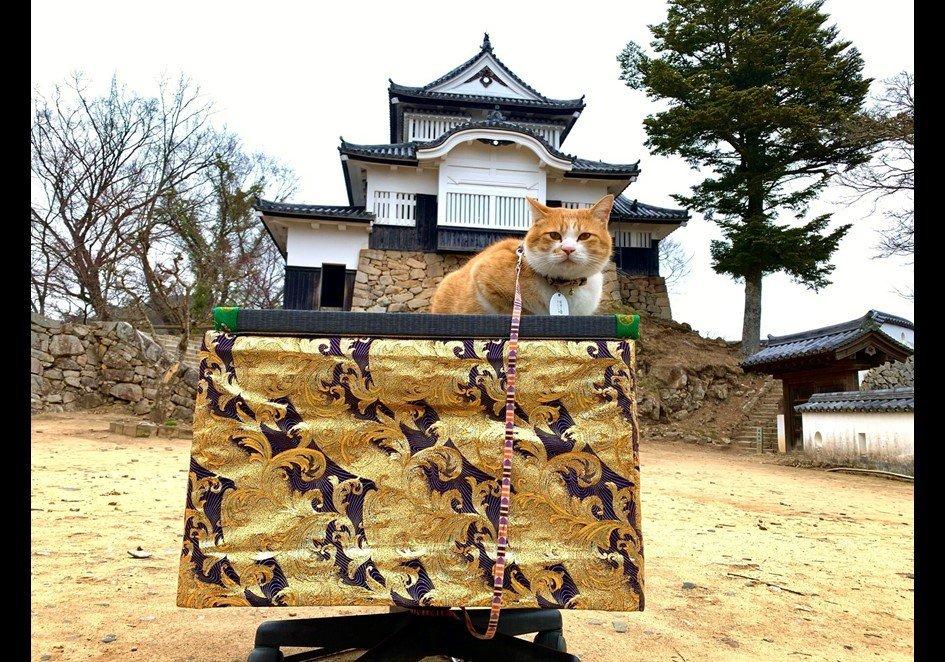 天空の城の猫城主(写真は「備中松山城 猫城主 さんじゅーろー」のツイッター(@sanju_ro)より