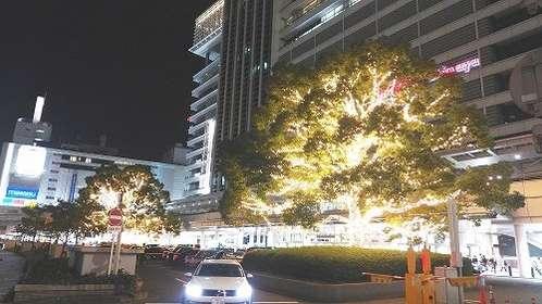 名古屋駅前のイルミネーションがあの野菜に見える?(画像提供:JR東海)