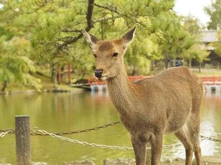 奈良の遠足では「おにぎり」必須?(画像はイメージ)