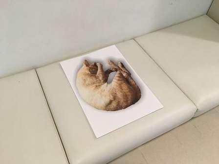これは従わざるを得ない... 沖縄県立博物館の「ソーシャルディスタンス猫」が天才的発想だった