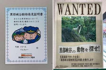 あっ、野生動物!→撮影成功で記念品ゲット 黒部峡谷トロッコの「動物を探せ」企画が楽しそう