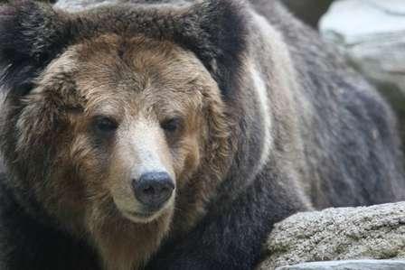 「体長70メートルのクマが目撃されました」 山形県警メールにまさかの誤植→「70センチの誤りでした」と謝罪