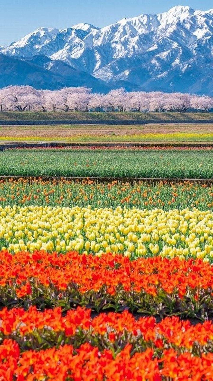 富山の春は本気だ イナガキヤスト(@inagakiyasuto)さんのツイートより