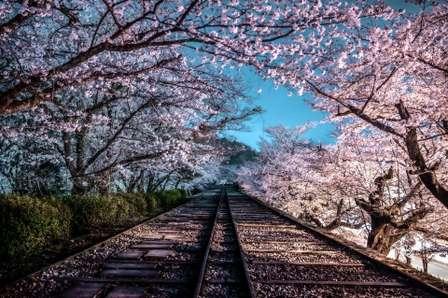 桃源郷まで行けそうだ... 京都「蹴上インクライン」の夜桜にうっとり