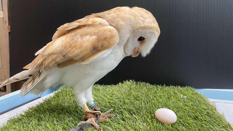 卵を見つめるアイちゃん(画像は周南市徳山動物園公式ツイッターより)