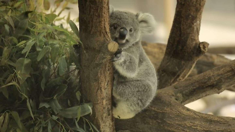 木に掴まる姿も可愛すぎる(画像はおーあ@kanazawakitechoさん提供)