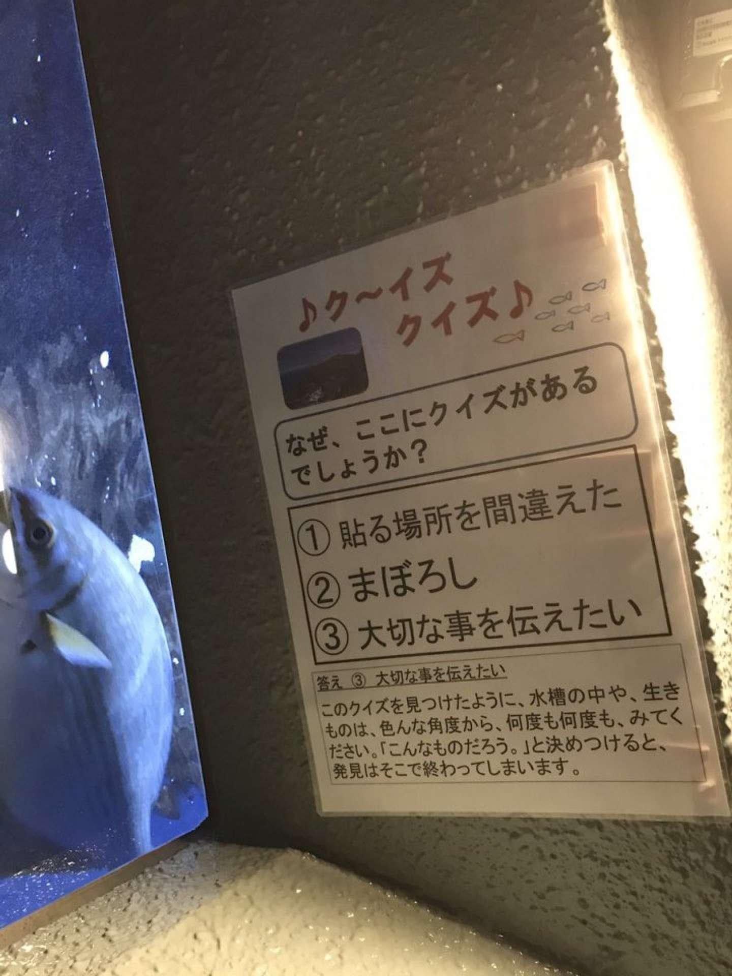 ク~イズクイズ(画像はカワセミ@Kawasemi8159さん提供)