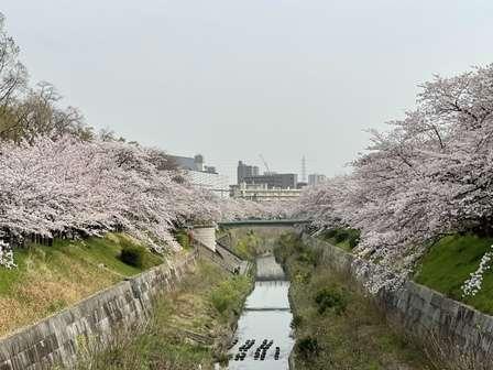 名古屋の桜の名所にかかる「鼎小橋」 人気の撮影スポットだけど...誕生の意外な理由とは