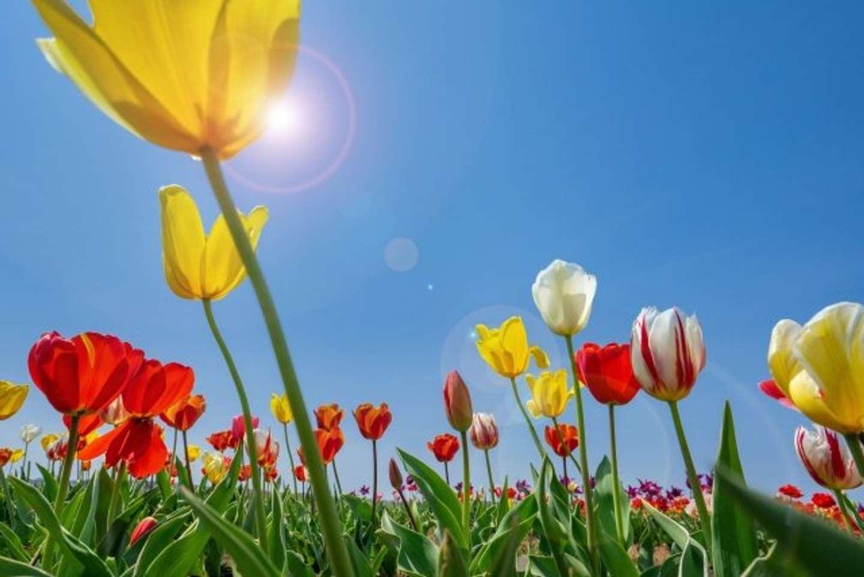 春、感じてますか?(画像はイメージ)