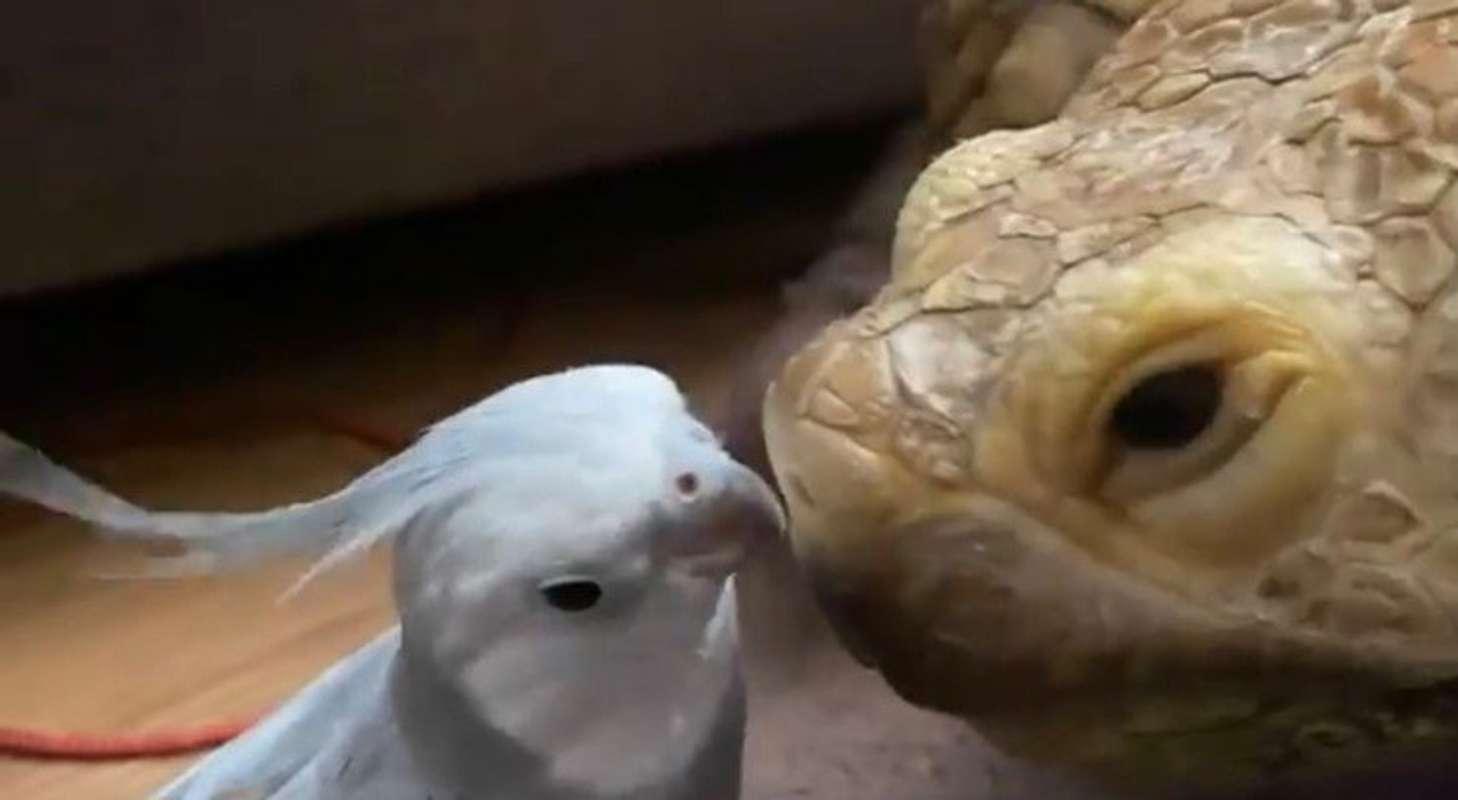 鼻と鼻でチュッ(画像はかめのももちゃん@kameno_momochanさんの動画より)