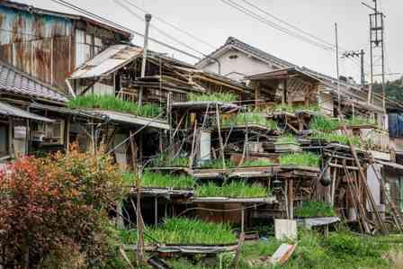 草が生えまくってる... 思わず探検したくなる「不思議すぎる家」が愛媛にあった