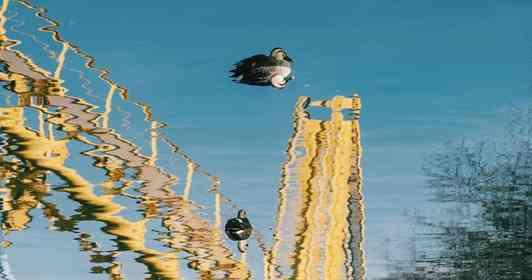 カモの足元に「水中遊園地」出現 ちょっと不思議な写真が「面白い」と話題