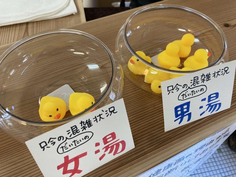透明な鉢にアヒルのおもちゃが(画像はにんじん湯@ninjinyu2021のツイートより)