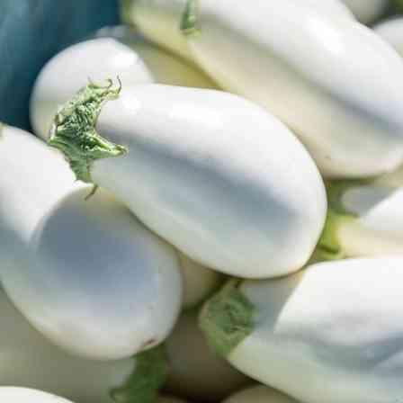 真珠みたいに輝いてる...! 真っ白でピカピカの宝石野菜「白なす」、知ってる?
