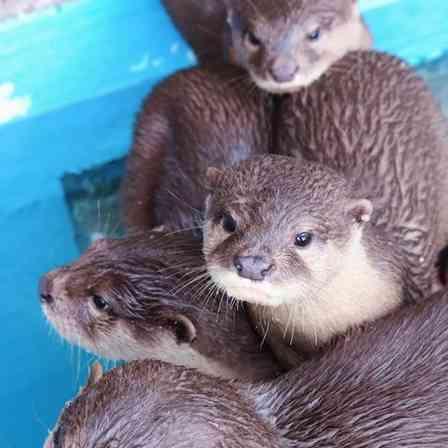 こんなウソなら大歓迎! 桂浜水族館の「ウソにウソを重ねた」ツイートに反響