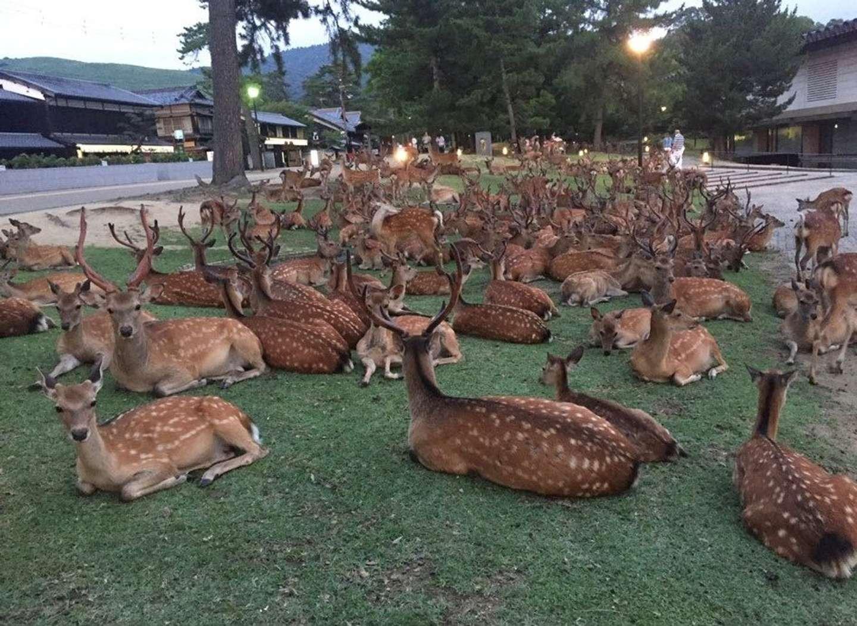 17年の鹿だまり(画像は投稿者提供)