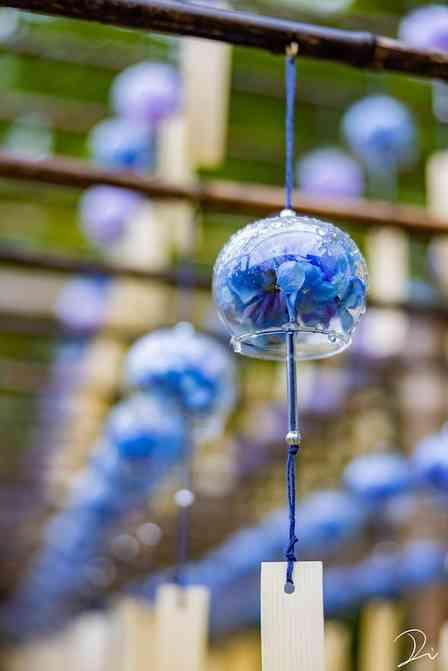 京都の風鈴寺でゆれる「あじさい風鈴」が美しい 暑さを忘れられそうな景色に反響