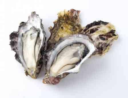 冬の味覚でおなじみだけど... 夏しか食べられない「牡蠣」、南三陸にあります