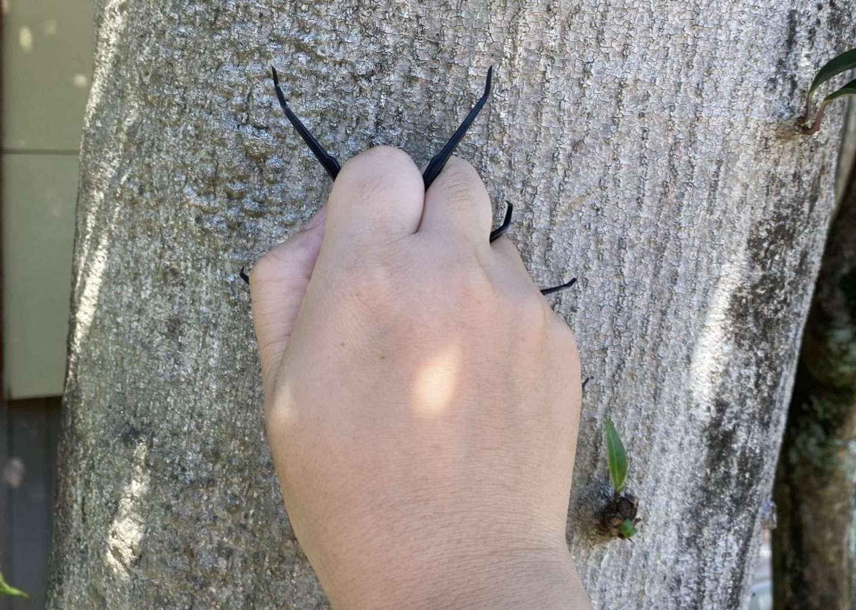 昆虫っぽい
