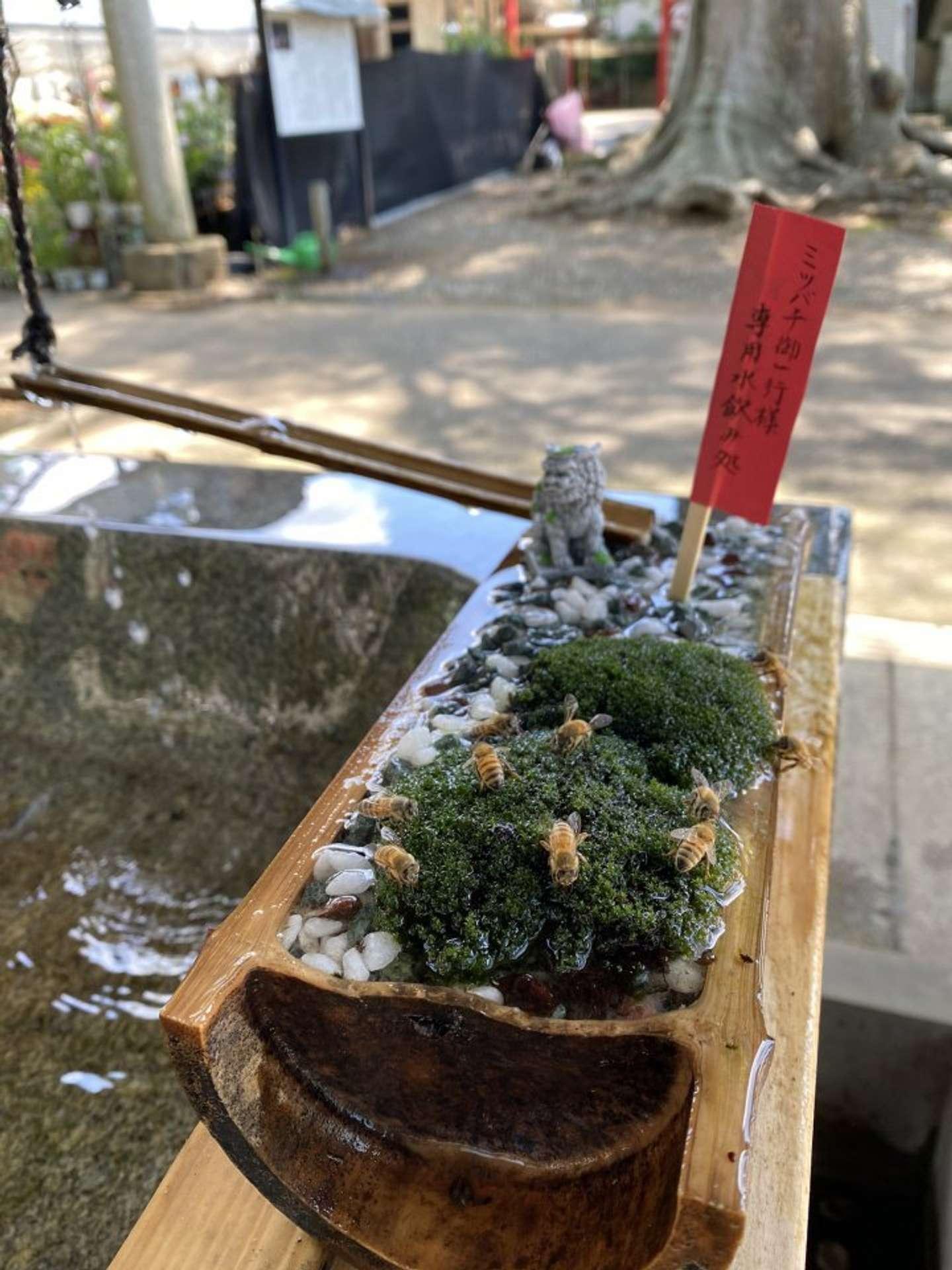 虫だって水分補給は大事だよね(以下、画像は一言主神社@hitokoto0913のツイートより)