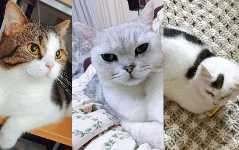 Ideoloさんの飼い猫(左からバオバオ、ミミー、饅頭)