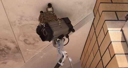 「副業」でツバメ、守ってます 予想外の働きをする防犯カメラに「なんという労りのマルチタスク」