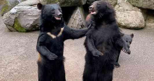 熊の鳴き声は「おっさんの呻き」にそっくりってホント? クマ牧場に聞いてみた