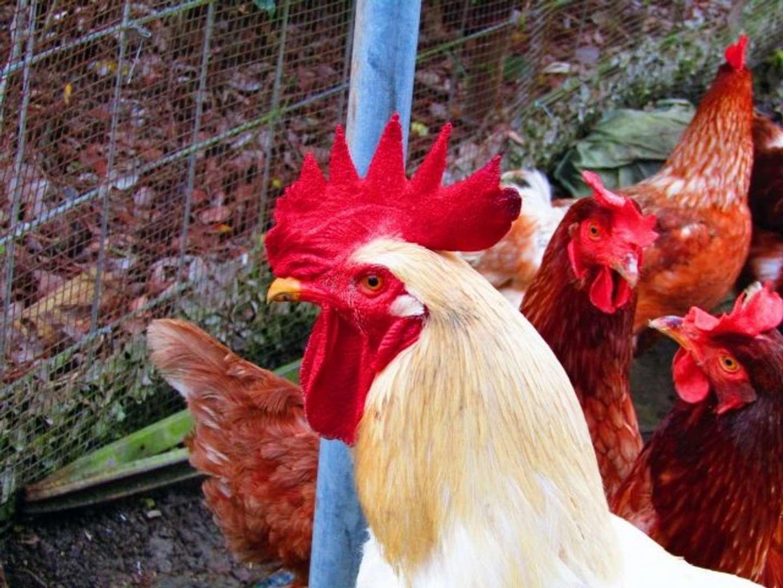 鶏のフンで海を元気に(画像はイメージ)