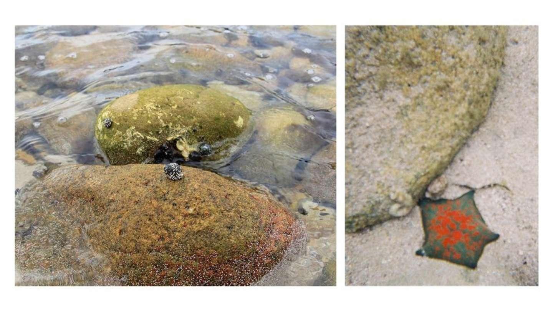 ヒトデは水中カメラで撮影。水が超透明だ!