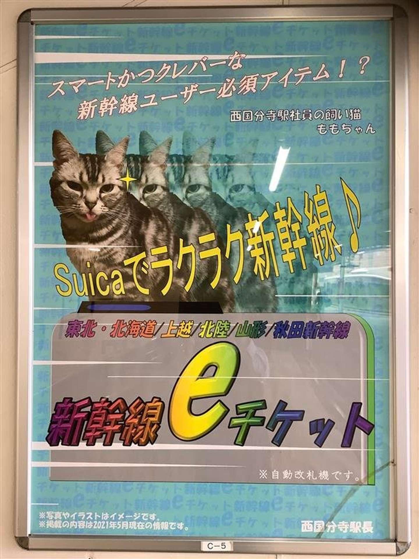 駅社員の飼い猫がモデルさん?(以下、画像はJR東日本八王子支社提供)