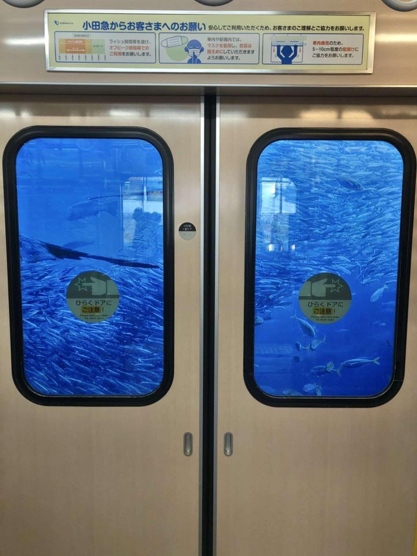 う、海の中に電車が!?(画像は江ノ島さんぽちゃん@enoshimasanpoさんのツイートより)