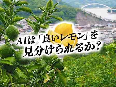 人工知能は「長年の経験と勘」の代わりになるか? レモンの名産地・広島で、未来を変える挑戦