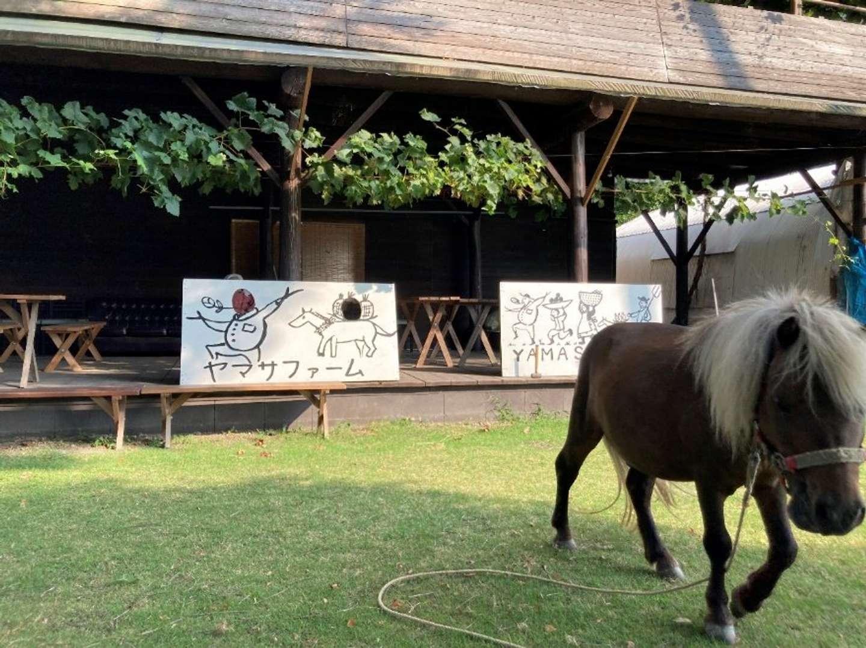 ぶどう狩りなどが楽しめる「ヤマサファーム」。園内のポニーは、観光客に大人気