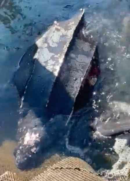 富山湾で「オサガメ」捕獲 なぜこんなところに?専門家に聞くと、カワイイ理由が判明