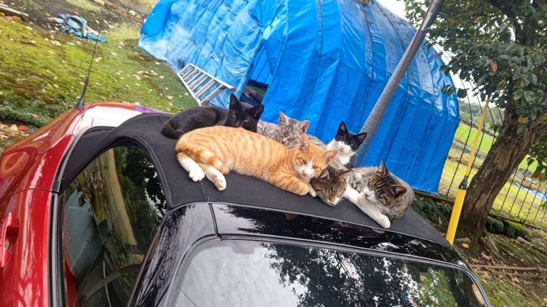 たくさん乗ってる...(画像は俊彦@toshicat_mx_5さん提供)