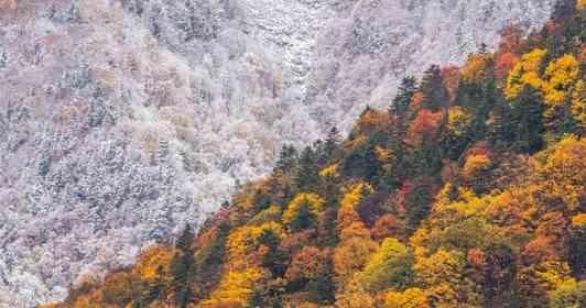 「秋と冬の境い目」がくっきり 紅葉と雪景色が「半分ずつ」な絶景に反響「カレーライスかと思った」