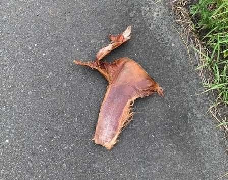 「おっきいベーコンに見えた」「小動物と勘違い」... 宮崎の路上によく落ちている、謎の物体の正体は