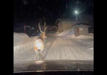 雪道を走っていたら、親切な4WDが先導してくれた... ファンタジーすぎるナビゲーターにうっとり