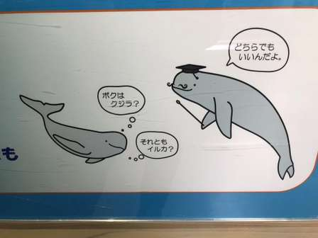イルカとクジラは「同じ生き物」だった 鳥羽水族館が「どちらでもいいんだよ」と解説する理由