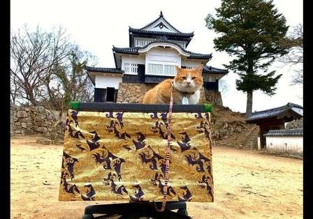 岡山・備中松山城ではニャンともカワイイ「猫城主」が出迎えてくれるらしい