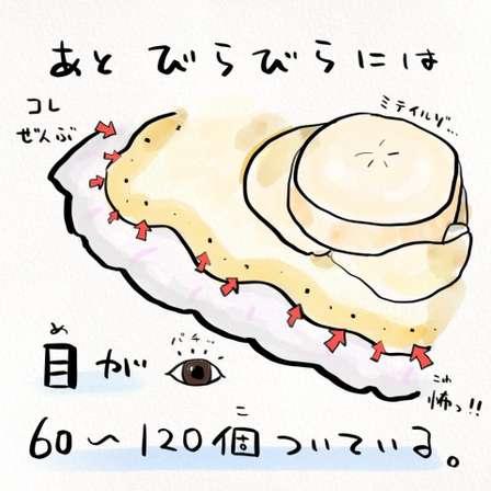ひぇっ……全部「目」だったの、アレ?(以下、画像はさかなのおにいさん かわちゃん@sakana_broさん提供)
